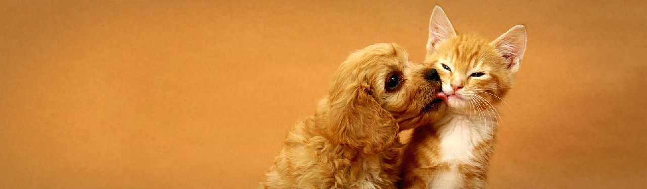 cocker-spaniel-puppy-kissing-little-red-kitten-web-header