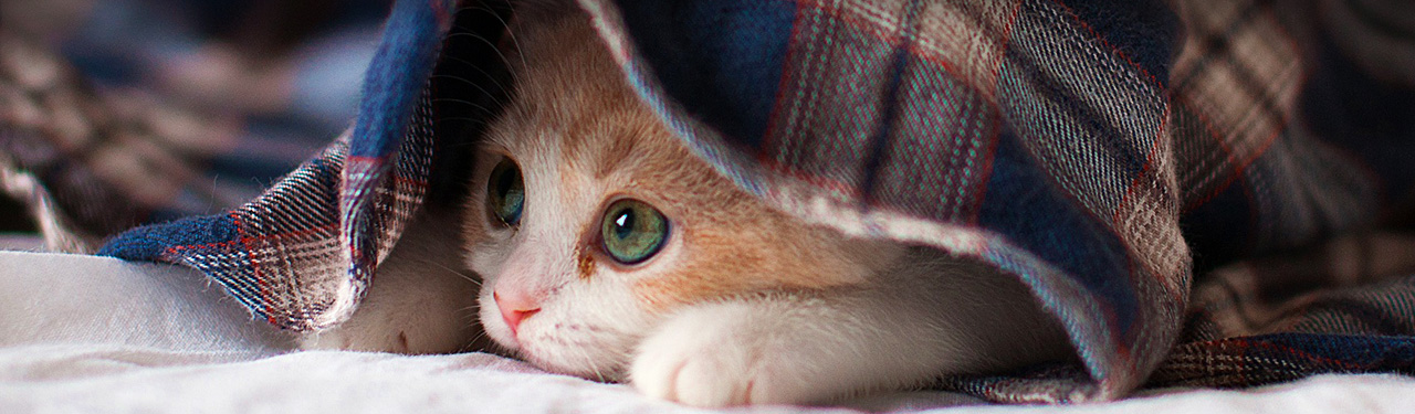 cute-sleepy-kitten-website-header